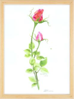 Pembe Gül / Pink Rose