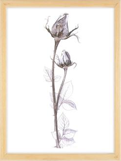 Siyah Gül / Black Rose